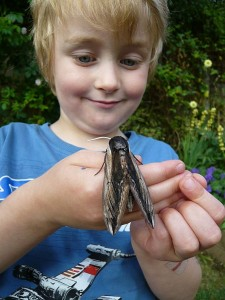 Child looking at privet hawk moth on its hands
