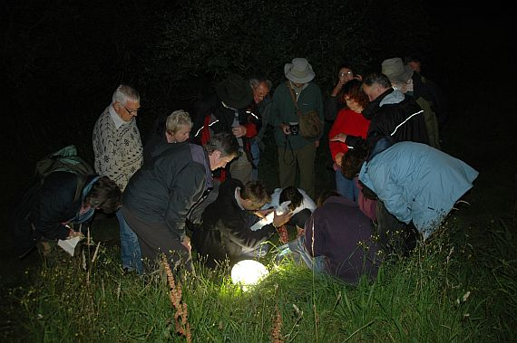 Group of people gathered around a moth trap in the evening.